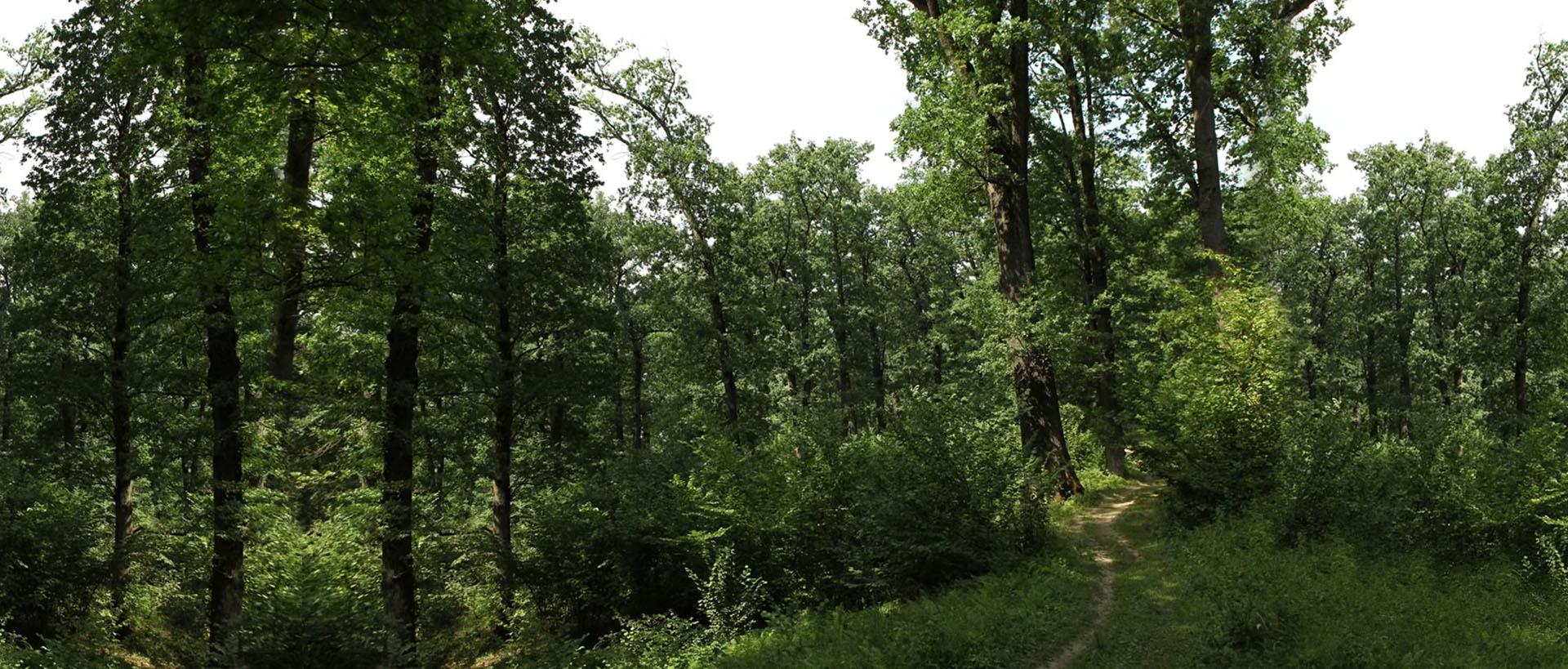 _0000_eco-maramures-mara-cosau-padurea-craiascaRezervatia-Naturalt-Padurea-Craiasca copy 2