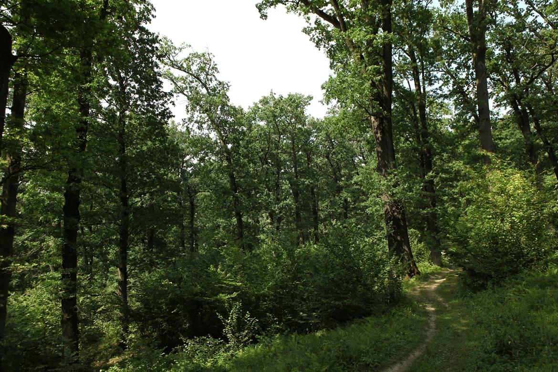 eco-maramures-mara-cosau-padurea-craiascaRezervatia-Naturalt-Padurea-Craiasca
