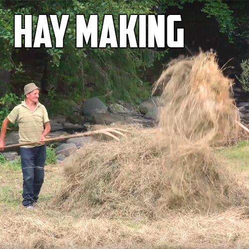 hay-making